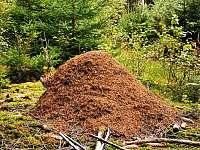 obří mraveniště - Mirošov