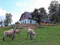 Penzion pod Čeřínkem - ubytování Mirošov