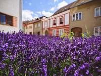 Apartmán U Zámku - apartmán - 46 Jemnice