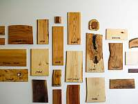 Naučná ukázka dřeva - Proseč - Záboří