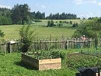 Pohled na les přes zahradu - Vlachovice