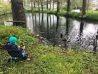 Rybník - kačeny - Vlachovice
