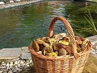 houbařský ráj v Železných horách - chata k pronajmutí Kraskov