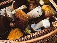 ráj houbařů - Rejčkov