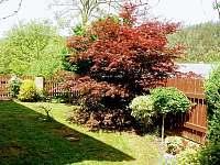 zahrada kolem objektu - chalupa k pronajmutí Želiv