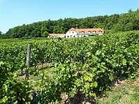 Vinařství s restaurací v obci - pronájem chalupy Kojetice na Moravě