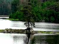 Chudobínská borovice- strom Evropy - Dalečín - Hluboké