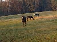 Mimo jiné se zabýváme výcvikem koní pro film. - Rybníček u Pelhřimova
