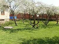 jabloně na zahradě - chalupa k pronajmutí Police u Jemnice