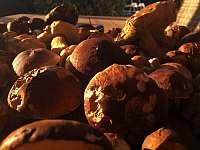 Kdo rád houbaří, bude nadšen :-) , les je blízko od chalupy. - Havlíčkova Borová