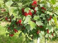 Možnost ochutnávky sezonních zahradních produktů. - apartmán k pronajmutí Holetín u Hlinska