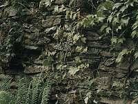 Chalupa k pronájmu - pronájem chalupy - 18 Hluboké u Kunštátu