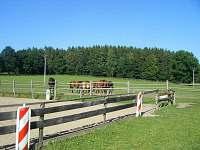 Koňský výběh za chalupou pod lesem (možnost jízdy na koni)