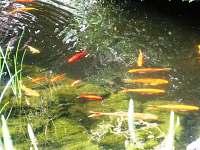 Barevné rybičky.