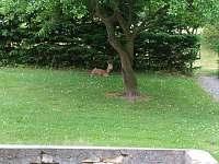 Pohled z kuchyně na zahradu. Někdy se tu zastaví srnec, chvilku poleží a pak jde