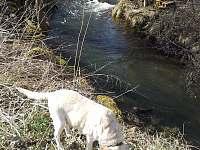 Žejbro - říčka před domem s naší labradorkou - pronájem chalupy Leštinka