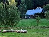 naše ovečky - chalupa k pronájmu Kuklík