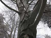 strom v okolí Žákovy hory