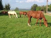 koně na pastvině - chalupa k pronájmu Újezdec