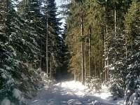 Lesy v okoli
