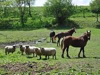 Zvířata na farmě - pronájem chalupy Knínice