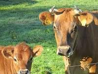 Farma pod kopcem - pronájem chalupy - 18 Rychnov