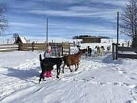 Farma pod kopcem - chalupa - 38 Rychnov