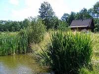 Z dřevěného mola u rybníku.