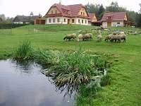 Farma u Vojtků Křižánky - chalupa ubytování Křižánky