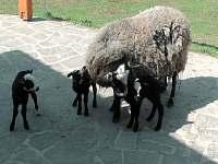 Farma u Vojtků - chalupa k pronajmutí - 20 Křižánky