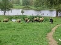 Farma u Vojtků - chalupa - 13 Křižánky