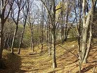 Zátiší s buky a habry - chalupa k pronájmu Svojanov - Předměstí