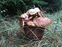 houbařská sezona začala - Hněvkovice u Ledče nad Sázavou