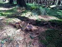 houbařská sezóna - Hluboká u Krucemburku