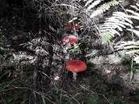krásná příroda - Hluboká u Krucemburku