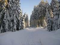 les v okolí - chalupa k pronajmutí Dědová