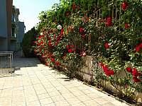 Alex Beach apartmán - pronájem apartmánu - 25 Sveti Vlas Bulharsko
