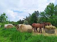 Chata u Dubu - koně - Újezd nade Mží