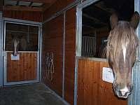 koně ve venkovních boxech - chalupa k pronajmutí Kamýk u Švihova