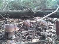 úlovky v místním lese