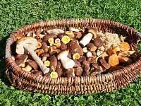 V lese je mnoho druhů hub.