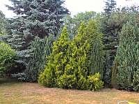 zákoutí na zahradě