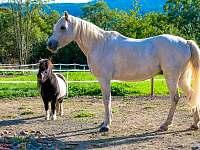 Koně na statku - Smederov