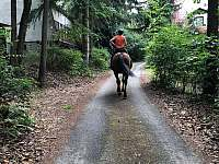jízda na koni - Pňovany