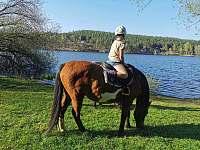 Na konich až k vodě - Pňovany