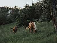 koníci - Kašperské Hory