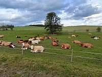 Pastvina u penzionu - Přetín