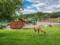 Lavande Ranch - vila - 37 Mladotice - Malá Černá Hať