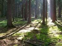 Krásné lesy plné hub