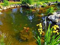zahrada - jezírko